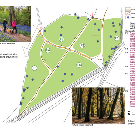 Slindon Park example survey and proposals